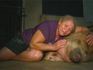 Família adota porco de 150kg em Matão (Foto: Reprodução/EPTV)