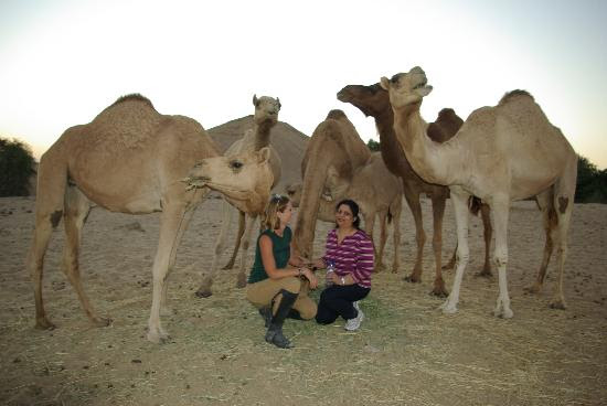 The Desert Ranch Dubai Location Attractions Map,Location Attractions Map of The Desert Ranch Dubai,The Desert Ranch Dubai accommodation destinations hotels map reviews photos pictures