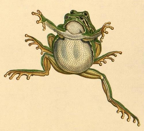 Frog coupling