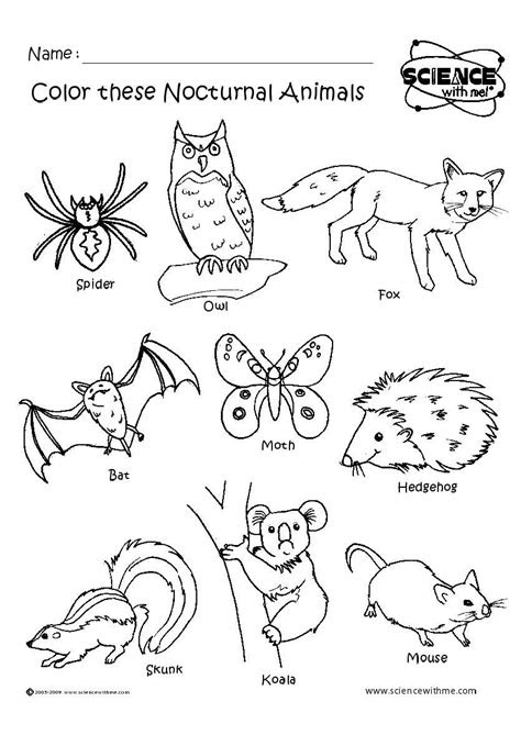 angol feladatok mondokak szinezok nocturnal animals