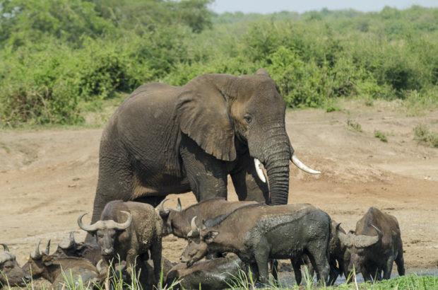 5 Reasons To Add Uganda To Your Bucket List