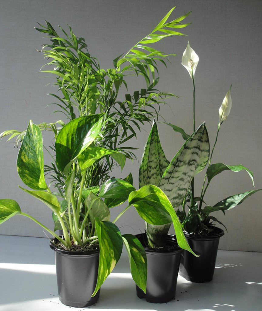 Air Cleaning Plants For Your Home | Comfort Spring