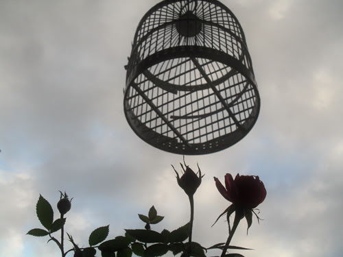 cage and flower