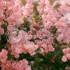 http://i757.photobucket.com/albums/xx217/carllton_grapix/13-18.jpg
