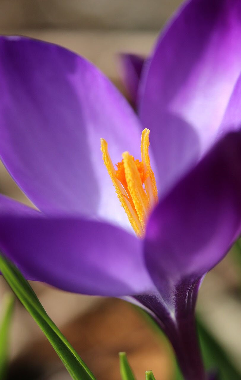 Spring flower photo, 35 best flower photos