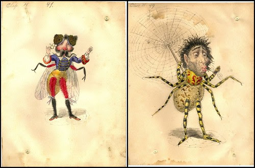 Fly and Spider by Charles Briton 1873