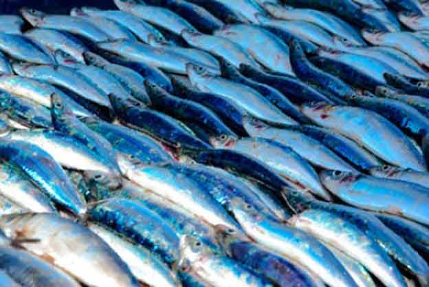 Fish prices controlled this festive season