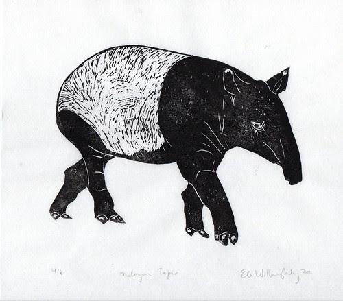 tapir513