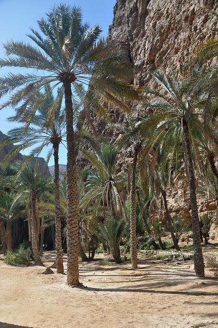 Wadi Shab (28)
