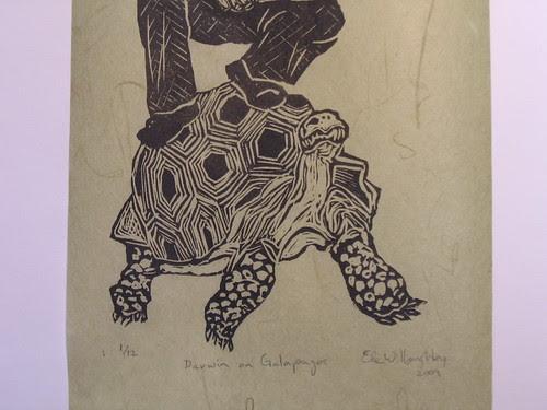 Galapagos Tortoise detail