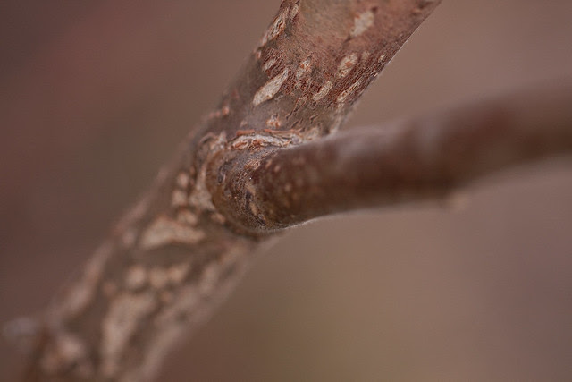 just a branch