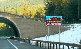Animalsbridgeflatheadreservation