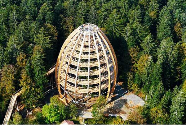 perierga.gr - Περιστροφικό μονοπάτι στο δάσος σε σχήμα δέντρου!