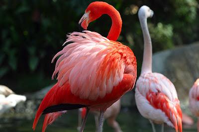 hewan manis di dunia yang terancam punah 15 Spesies Cantik yang Terancam Punah