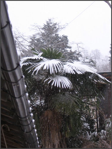 03 palm tree in snow