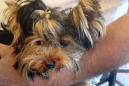 Yorkie's death at airport facility fuels legal fight
