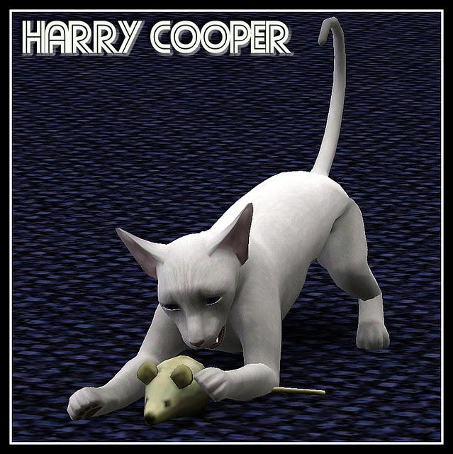 HarryCooper_covershot