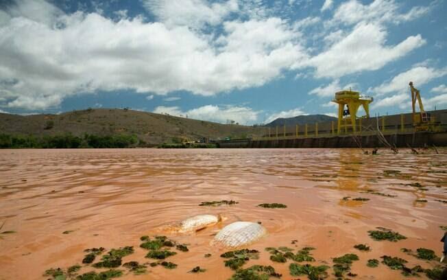 Populares recolhem peixes mortos no Rio Doce em Baixo Guandu (ES)
