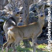 www.rifugiolevimolinari.it
