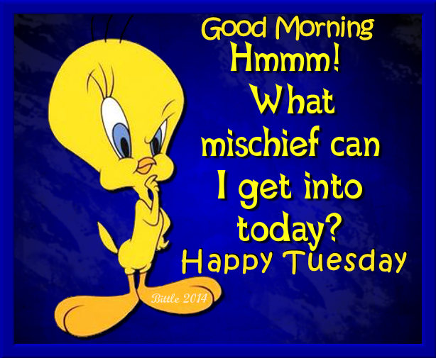 Tweety Bird Good Morning Happy Tuesday Pictures Photos And Images