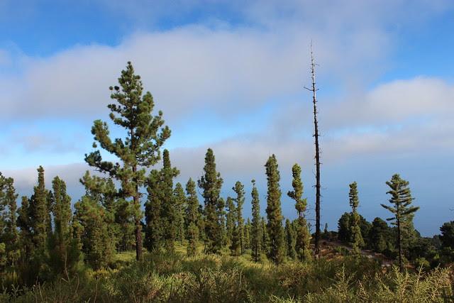 002b.13.1.Recorrido por incendio Tenerife 2007