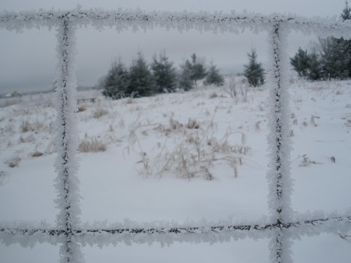 Frosted Fence with Trees