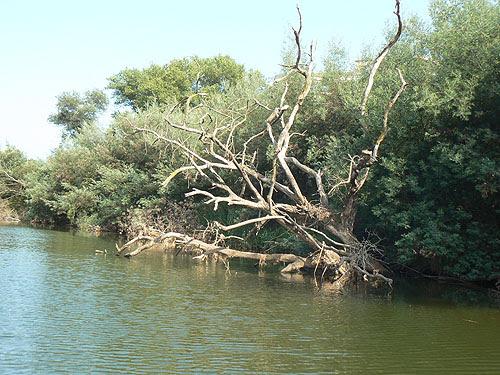 arbre mort.jpg