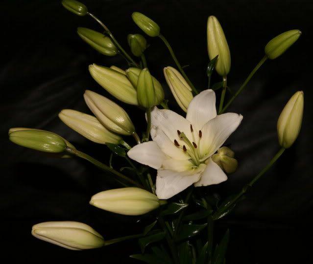 Nydelige liljer