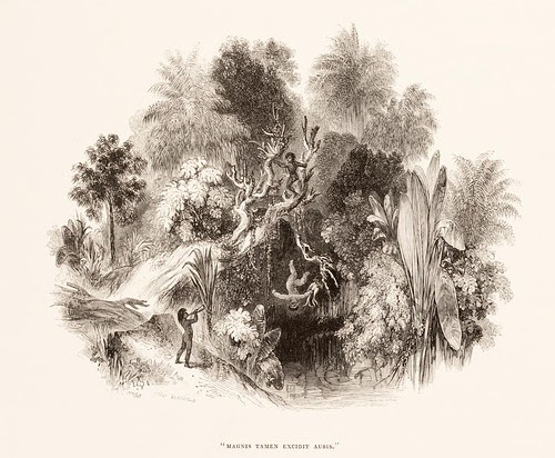 engraved jungle scene - trumpet orchid