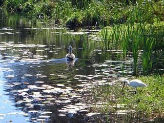 Birdlife, Buckelsy Hole