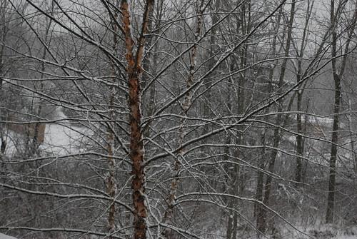 From my bedroom window