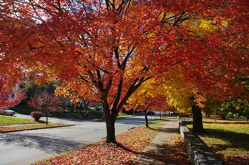 Autumn at IU