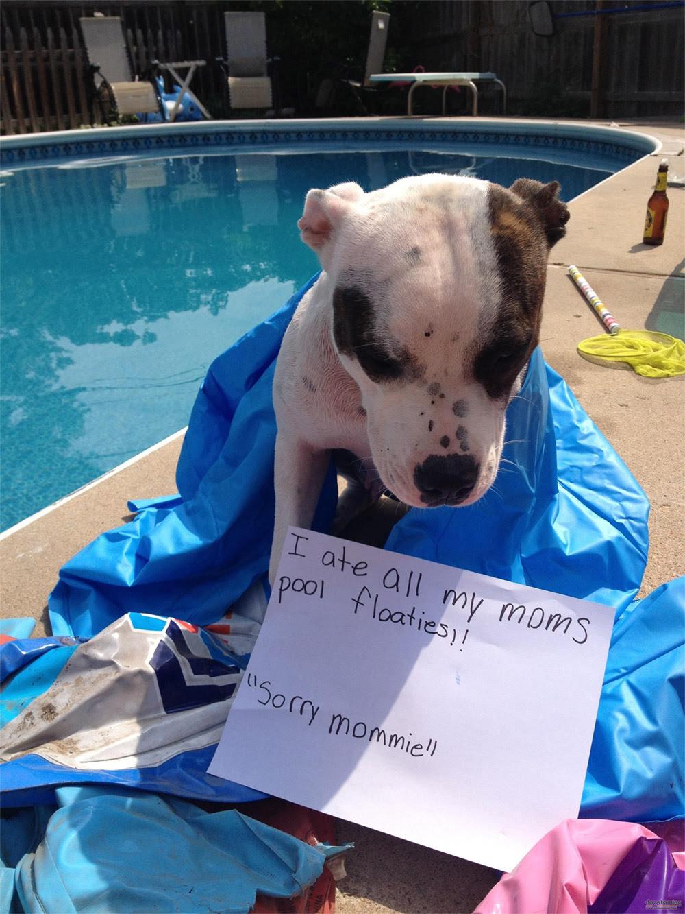 dog shaming 28 32 Hillarious Public Shaming of Dogs