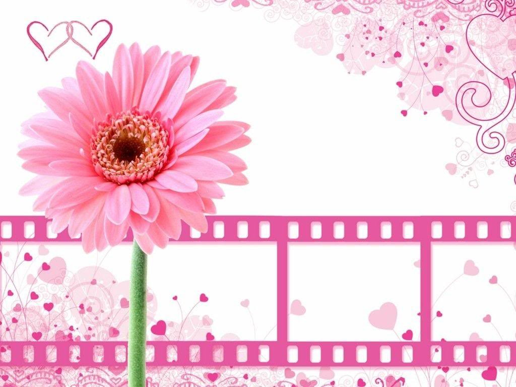 Pretty Pink Flower With Film Clips Free Ppt Backgrounds For Your