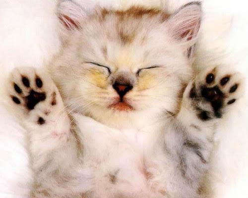 Imagens Tumblr - Gatos20130115-gato-filhote_3554_1280x1024