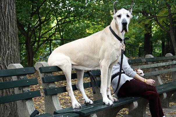 36. Just sit on the bench the size of the dog