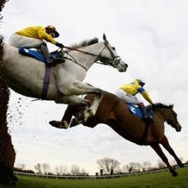 horse race2