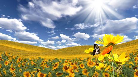 http://joieetabondance.com/wp-content/uploads/2014/06/Papillon-soleil-fleurs-changer-de-vie-abondance-joie-nature-bonheur.jpg