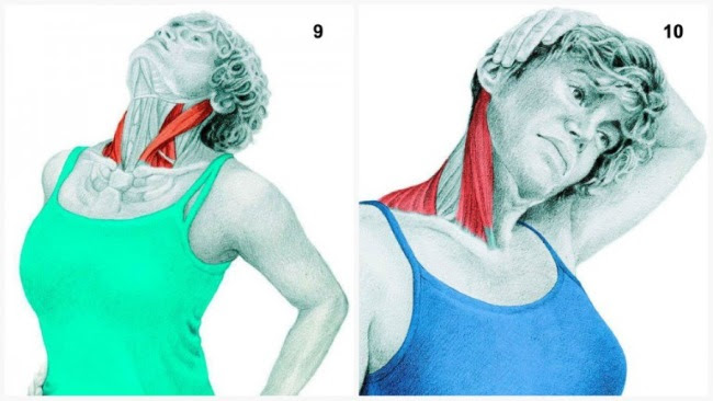 See Which Muscle You're Stretching - Anatomy Body