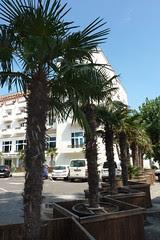 Palmieri în faţa hotelului Rex din Mamaia