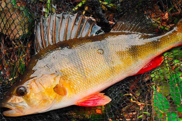 Рыбалка в сентябре, какую рыбу ловить в сентябре, рыбалка в сентябре на спиннинг, рыбалка в сентябре на щуку, рыбалка в сентябре на окуня, рыбалка в сентябре на судака, рыбалка в сентябре на каася, рыбалка в сентябре на карпа, рыбалка в сентябре на плотву, рыбалка в сентябре на леща