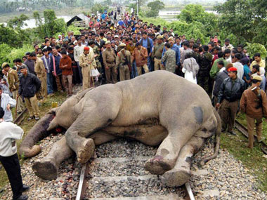 Villagers look at the body of an elephant lying on the railway track at Chandrapur, about 20 km from Guwahati. AFP