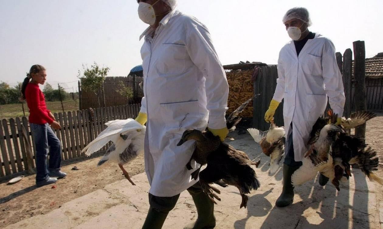 Συναγερμός στην Ολλανδία: Χιλιάδες κρούσματα γρίπης πτηνών