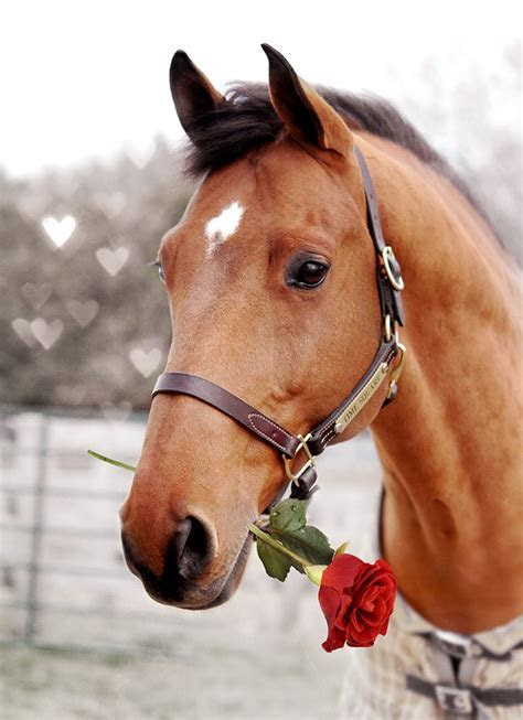 56 best Lovey Dovey Horses for Valentines Day! images on