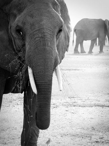 ElephantPhotobyLuke