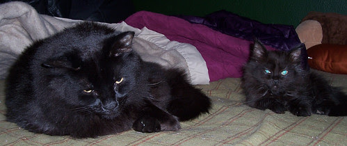 Eeyore and his tiny lookalike Thirteen