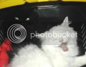 Da pukneš od smijeha-Smiješne slike, Mačka