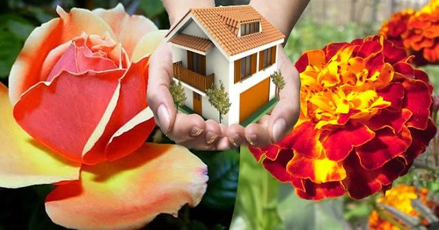 तुलसी, गुलाब, गेंदे जैसे पौधों से बढ़ती है घर की सकारात्मकता, जाने इन्हें किस दिशा में लगाएं