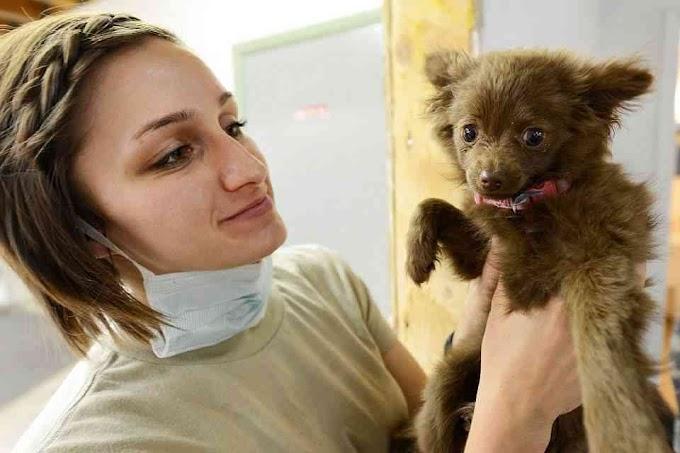 Estos son los cuidados imprescindibles para el cuidado de tu mascota
