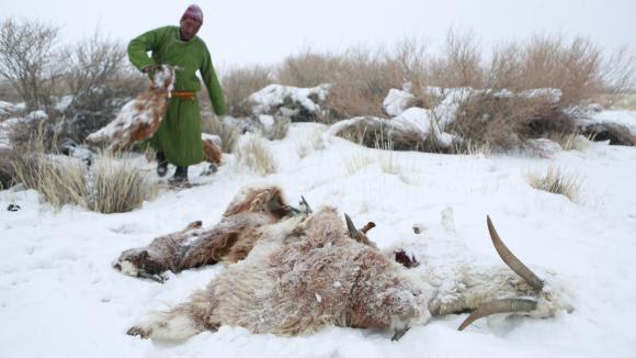 """Résultat de recherche d'images pour """"Dzud  mongole"""""""